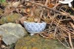 03 Broken Tea Cup