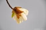 Fukuoka - Flower