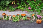 Mushrooms In Chernobyl - Don't Eat Or Smoke Them!
