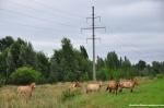 Przewalski's Horses 05