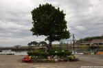 The Sculpture Tree