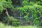 Overgrown Fences