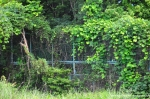 Overgrown Fences