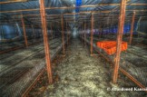 Poultry Farm 2 HDR - Rusty Metal