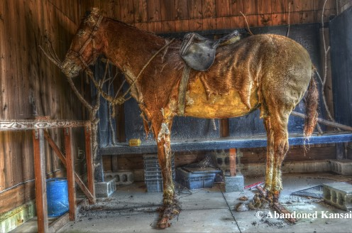 Yamaguchi New Zealand Village HDR - Taxidermy Horse