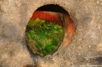 Moss Growing In A Drainage Pipe