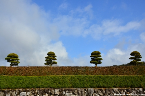 Well-trimmed Hedges And Trees
