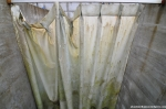 Moldy Shower Curtain