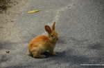 Cute Bunnies Everywhere!