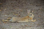 Master Hare Is Relaxing In The Shadow