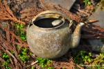 Abandoned Tea Pot