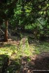 Narrow Path ToNowhere