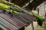 Rusty Corrugated Iron Roof
