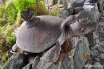 Japanese Turtle