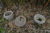 Abandoned Japanese Garden