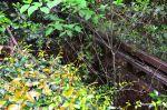Overgrown Monorail