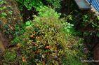 Overgrown Top Stop