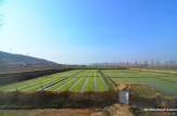 Countryside Near Nampo