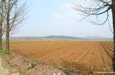 Fields North Of The DMZ