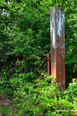 Overgrown Rusty Gate