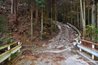 Concrete Road In A Japanese Forest