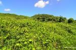 Overgrown Spoil-Tips – botayama –ボタ山