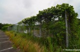 Overgrown Tennis Court Fence
