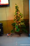 Christmas Tree In NorthKorea