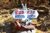 Animal Signpost, Mount Chilbo, North Korea