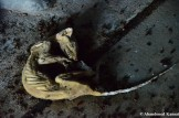 Creepiest Urbex Find