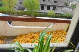 Stockpiling Corn On A Balcony