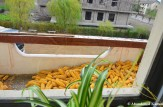 Stockpiling Corn On A Balcony