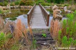 Abandoned Pond