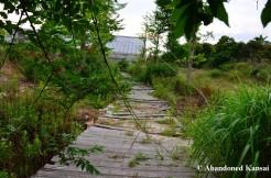 Post-apocalyptic Garden