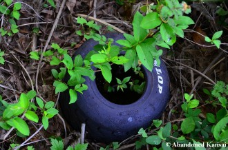 Abandoned Dunlop Tire