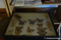 Abandoned Butterfly Collection