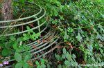 Overgrown Sitting Accomodation