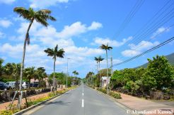 Hachijojima Road