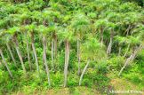 Palm Farm, Young Trees