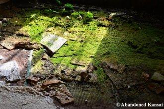 Moss Tatami Floor
