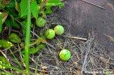 Abandoned Tennis Balls