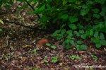 Squirrel On TheRun
