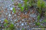 Hundreds Of Rusty MetalBalls