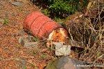 Abandoned Red Barrel