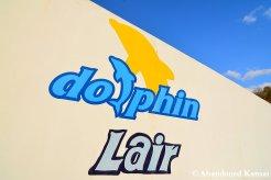 Dolphin Lair Logo