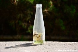 Abandoned Soda Bottle