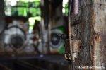 Deserted Railroad Yard