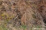 Overgrown Hoffmann Kiln