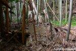 Bamboo Backyard
