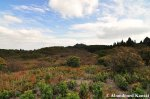 Overgrown Mount Atago SkiResort